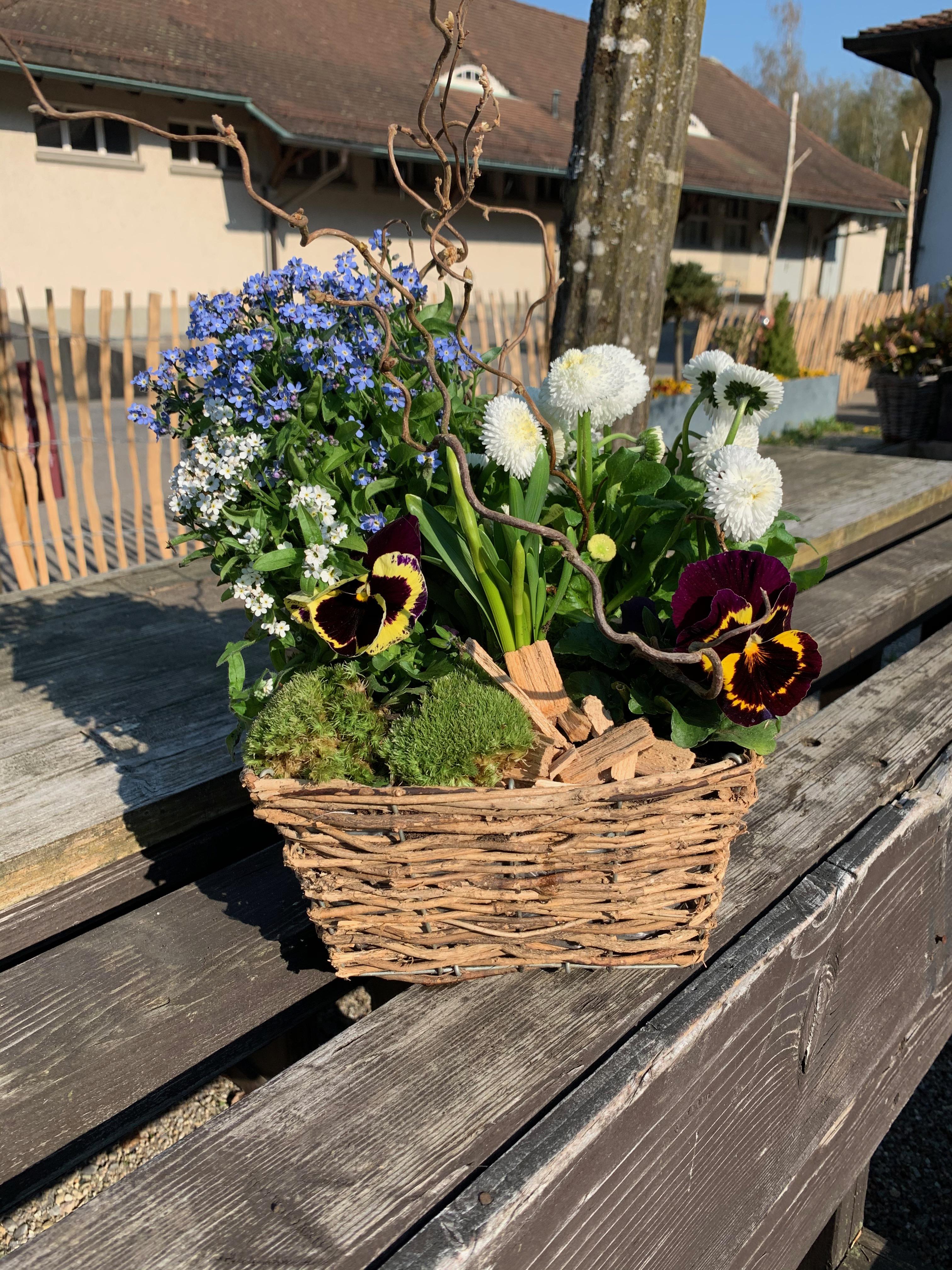 Frühlingskorb viereckig mit Viola und Vergissmeinnicht
